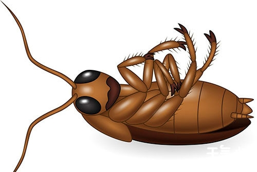彻底消灭蟑螂的小妙招 整个蟑螂家族一个不留