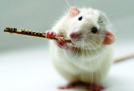 软陶泥老鼠片大全 动物